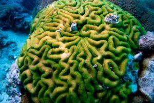 coral head in palau with bentprop