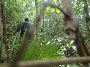 deep jungle hiking in palau with bentprop