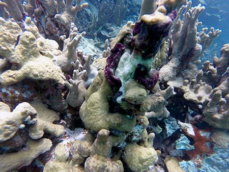coral of palau