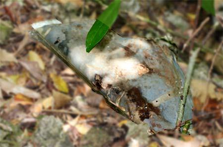 WWII crash piece palau bentprop