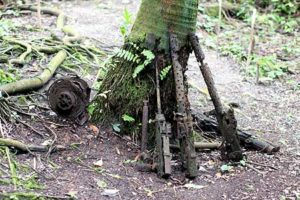 japanese guns found in jungles of palau