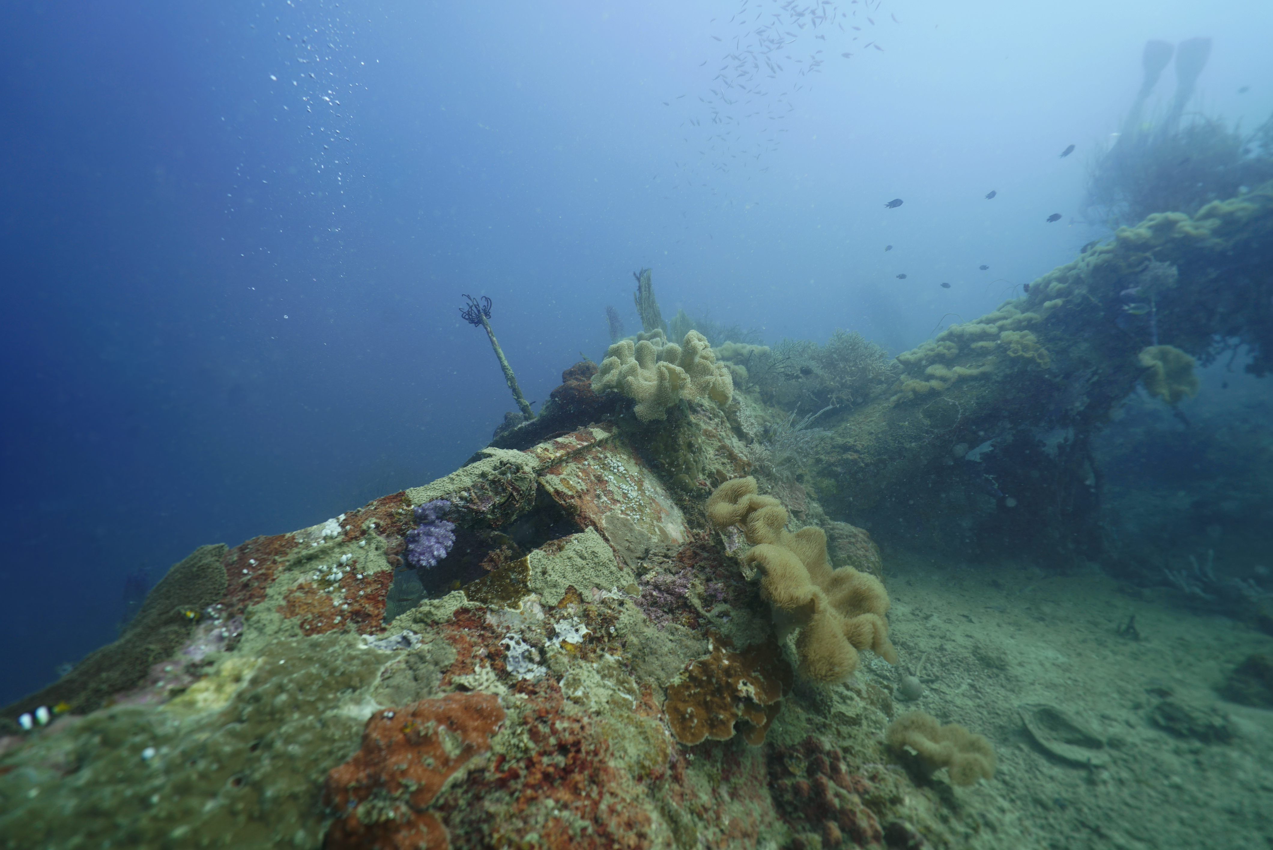 The wreckage of a B-25 bomber documented by Project Recover in the waters of Papua New Guinea.