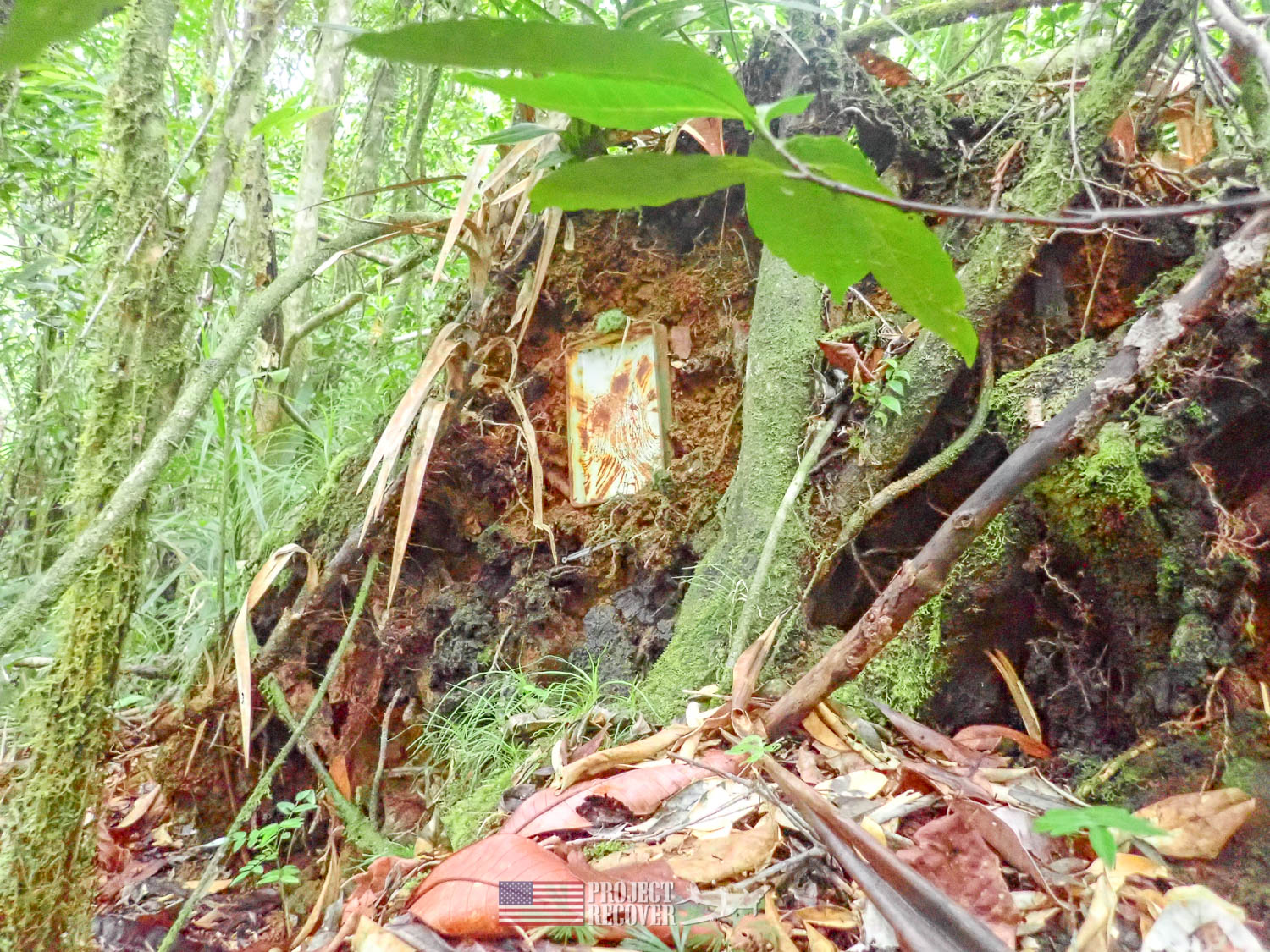 Frying plane embedded in tree in jungle. Execution of WWII POWs and Innocents in Palau - Project Recover is committed to bringing the MIA home. Photos by Harry Parker Photography.com