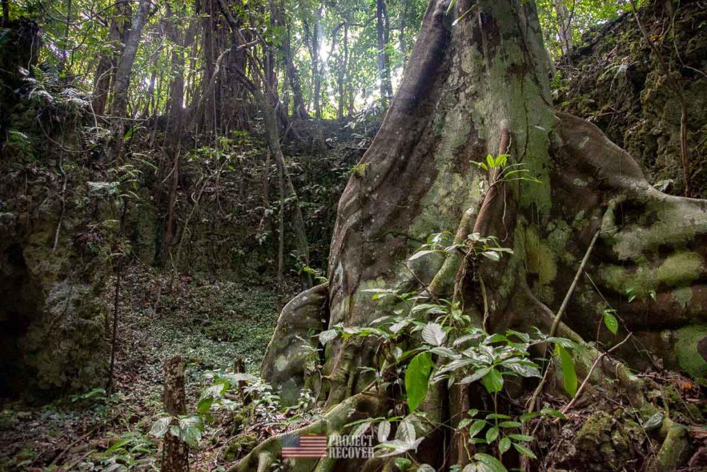 Jungle in Peleliu